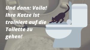katze toilette gewöhnen