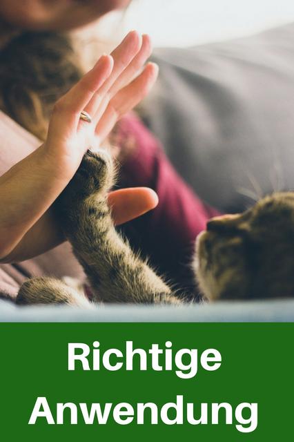 alternativmedizin für Kätzchen