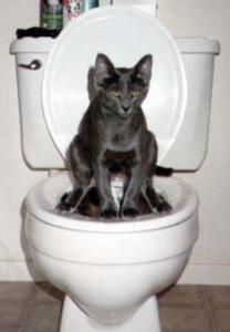 Wie lernt man katzen aufs menschenklo zu gehen