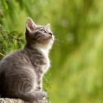 babykatze schaut nach oben