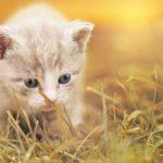 was ich liebe im katzenleben