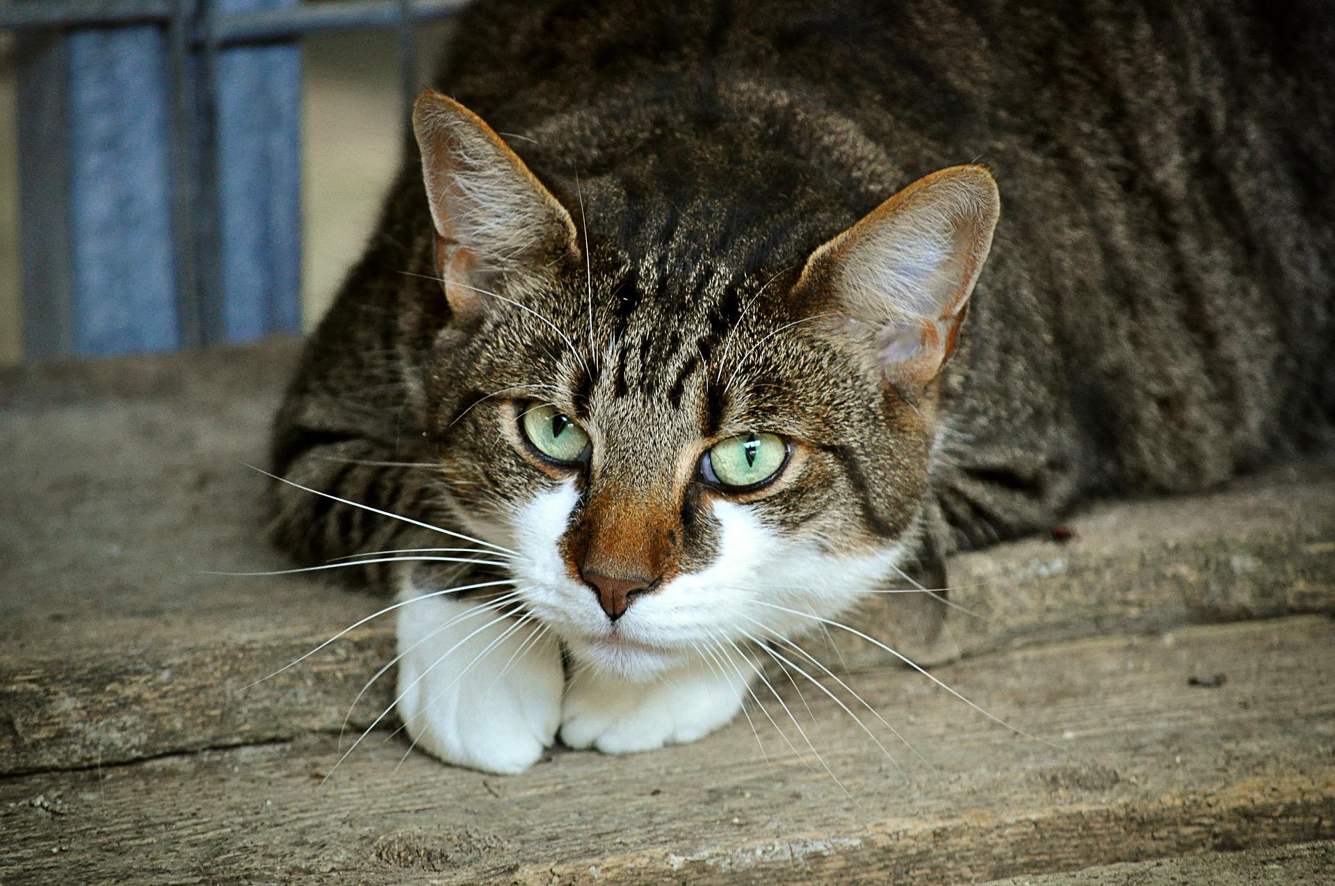 katzenversicherungen sparen tierarztkosten
