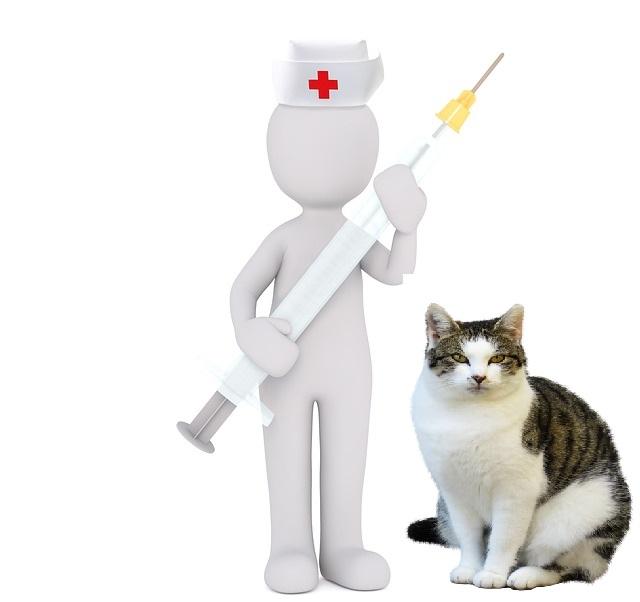 katzen impfen zuhause