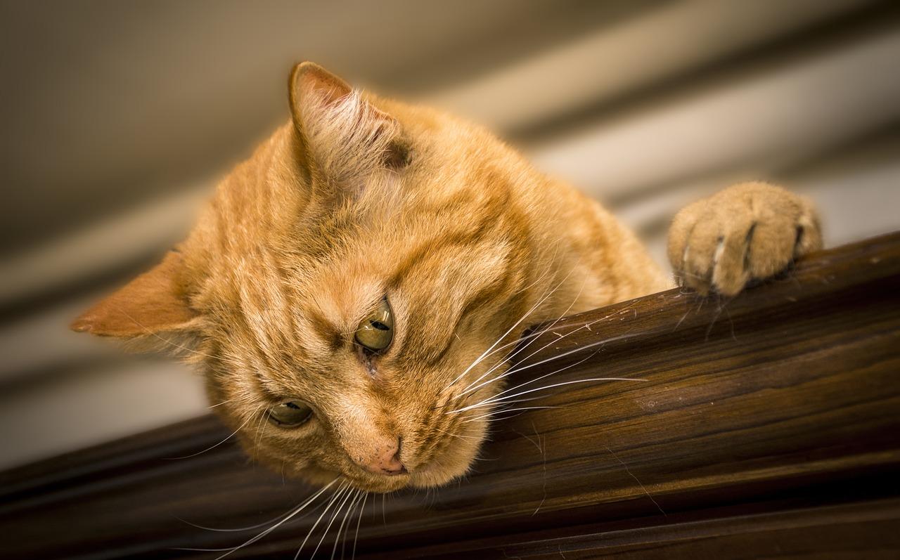 katzen zu zweit alleine lassen