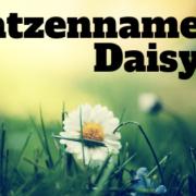 name daisy