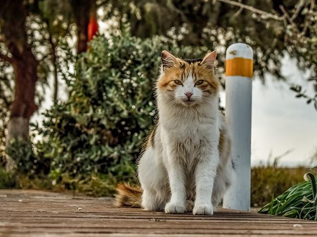vermisste katzen wiederfinden