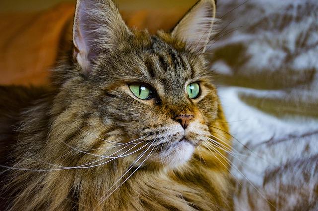 Nacherzählung Coonies Katzen Hilfe Und Tipps