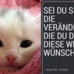 Katzenhilfe macht die welt besser