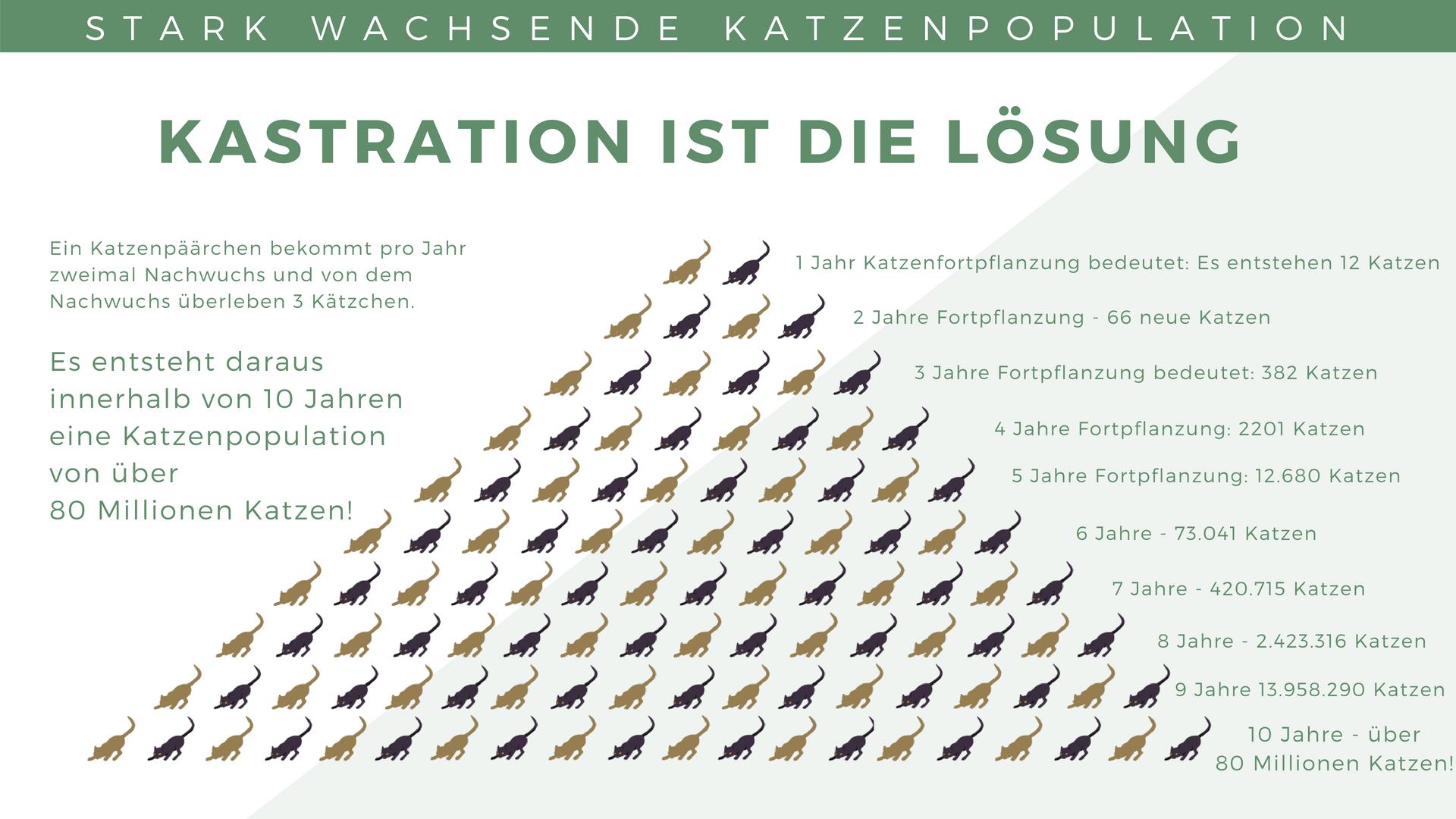 Katzenpopulation Deutschland