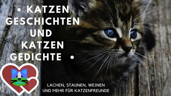 geschichten über katzen
