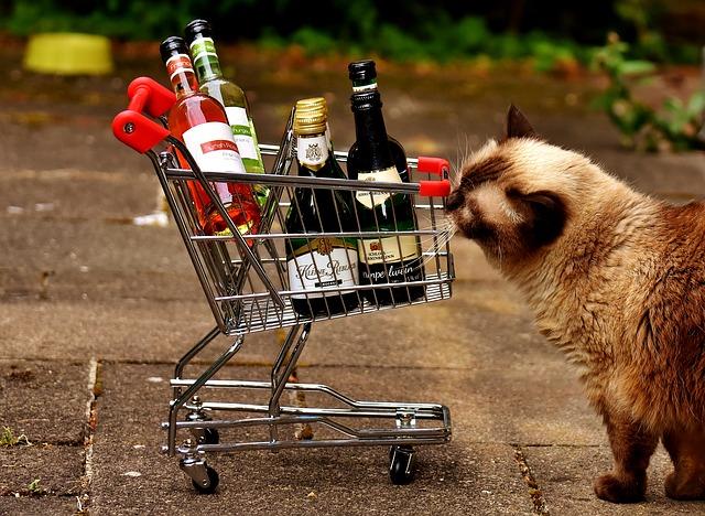 shopping für katzenfreunde