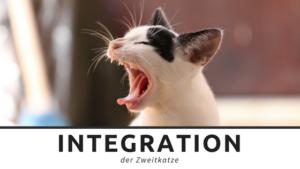 Zweitkatzenintegration