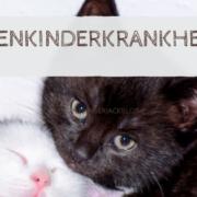 katzenkinder entwurmen