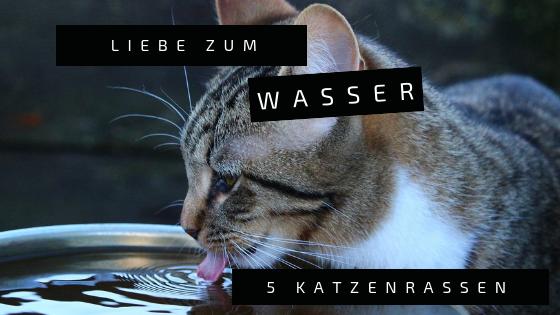 wasserkatze
