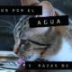 5 razas de gatos que aman el agua y