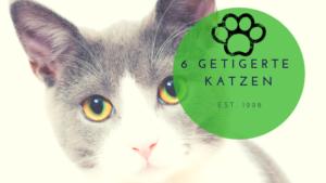 hilfe für 6 katzen im tigerlook
