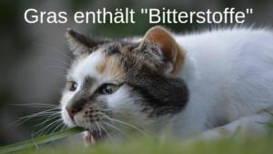 Katzenwürgen von Gras