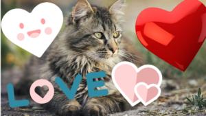 katzen verstehen menschen