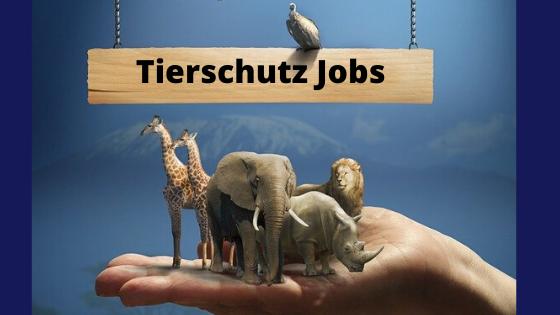 tierschutz jobs